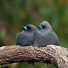 Two Grey Birds by Caroline  Lloyd