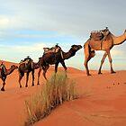 Camel Train, Sahara Morocco by Debbie Pinard