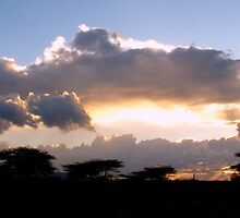 Samburu Sunset I by Jennifer Sumpton