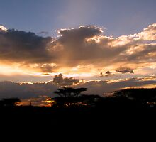 Samburu Sunset II by Jennifer Sumpton