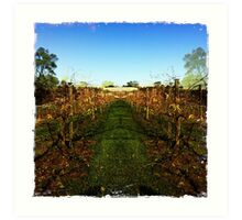 View through the grapevines Art Print