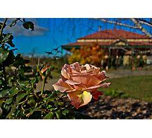 Apricot Rose Photographic Print