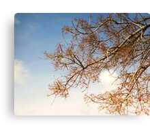 BLOSSOMS! Canvas Print