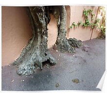 Rooted On Cap Ferrat Poster