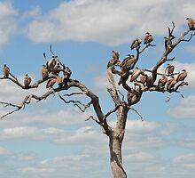 Nine and Twenty Brown birds...... by Macky