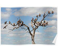 Nine and Twenty Brown birds...... Poster
