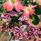 Lilac and Dogwood by Barbara Wyeth
