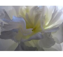 Soft White with a Touch of Yellow Photographic Print
