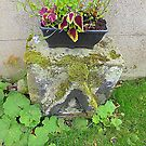 Coleus On Ancient Stone by Fara