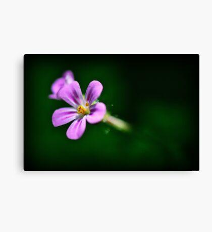 Pink Herb Robert Wildflowers Canvas Print