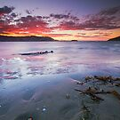 Southern Fire - Otago Peninsula, New Zealand by Matthew Kocin
