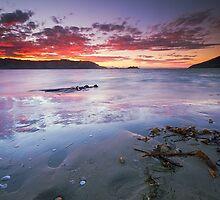 Southern Fire - Otago Peninsula, New Zealand by Matthew Kocin