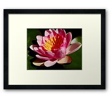 Pink Water Lily II ... Framed Print