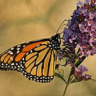 Monarch Butterfly  by Sandy Keeton