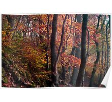 Autumn In Ousbrough Woods Poster