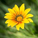 Yellow Flower by Danielle Espin