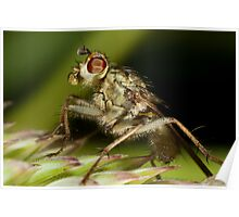 Fly on Grass Poster