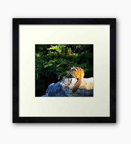 Chipmunk 1 Framed Print
