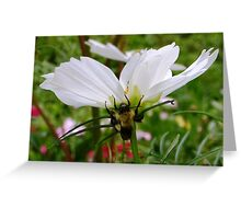 Bumble Bee on Cosmos Greeting Card