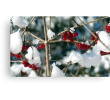 Winter Berries Canvas Print