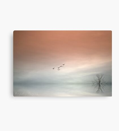 Flight of the Swans Canvas Print