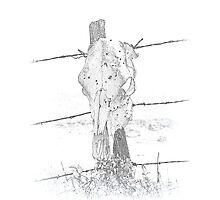 Skull on a fencepost Photographic Print