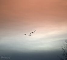 Swan Song by Annie Lemay  Photography