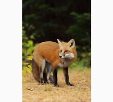 Red Fox, Algonquin Park T-Shirt