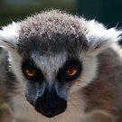 Wingham Wildlife Park, Kent by -Nesquik-