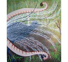 Elusive Lyrebird Photographic Print