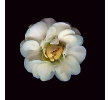 Micro Flower Photographic Print