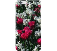 Tulips 16 iPhone Case/Skin