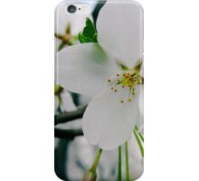 Cherry Blossoms 4 iPhone Case/Skin