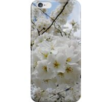 Cherry Blossoms 6 iPhone Case/Skin