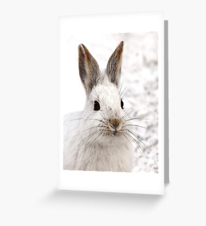 Snowshoe Hare closeup Greeting Card