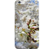 Cherry Blossoms 11 iPhone Case/Skin