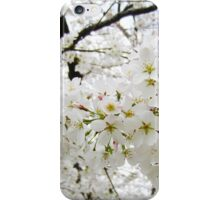 Cherry Blossoms 12 iPhone Case/Skin