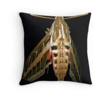 Moth Sleeping Forever Throw Pillow
