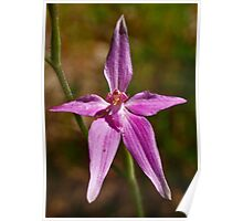 Pink Fairy Orchid Poster