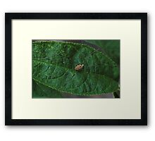 Who's Your Daddy Long Legs?? Framed Print