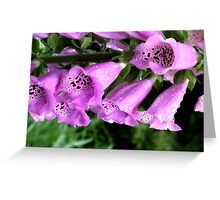 Spring Showers 01 Foxgloves Greeting Card
