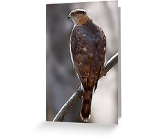 Cooper's Hawk profile Greeting Card