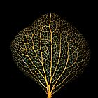 Skeletonized Hydrangea Petal by Marvin Hayes