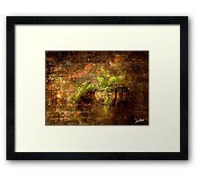 Asparagus Fern Framed Print