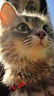 I am Eva hear me meow by schizomania