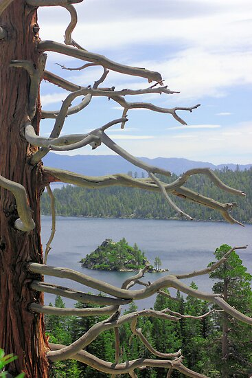 Emerald Bay Though Cedar by Mickey Hatt