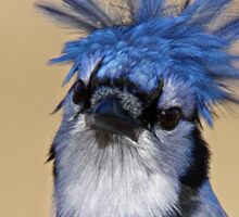 Is that you Don King? - Blue Jay Sticker