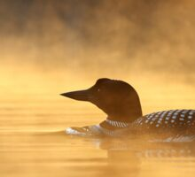Into the Mist - Common Loon Sticker