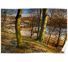 Beamish Trees Poster