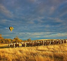 Sheep and Hot air Balloon. by Peter Hodgson